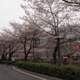 20100331_tokyosakura_008
