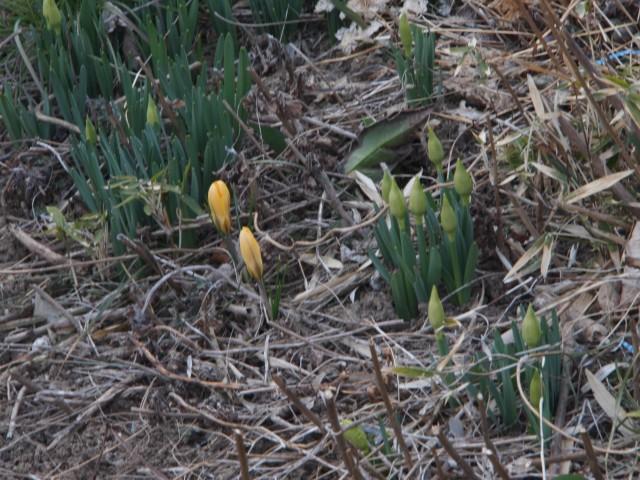 20120321_springcome_002